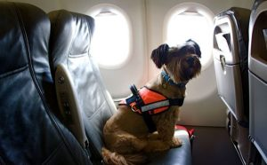 Most Bizarre Private Jet Client Requests - Client Stopped The Plane For His Dog